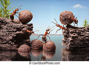 team of ants construct dam, teamwork - team of ants work...