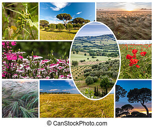 Collage of the hills in Tuscany