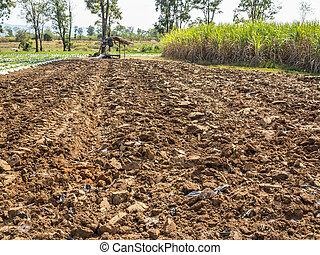 Tillage cultivation for crop plant in winter