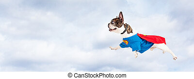 Super Hero Dog Flying Through Sky - Funny photo of French...