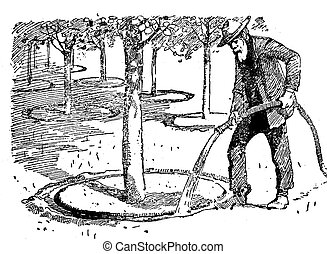 Agriculture engraving - watering trees in orchard -...