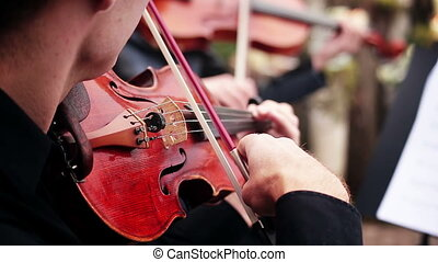 musical ensemble musician playing the violin - musical...