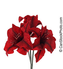 bouquet of artificial red flowers, , photo on the white...
