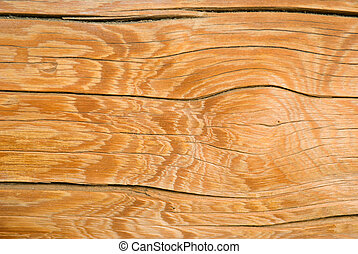 Wood texture background,old log.Wooden gnarl
