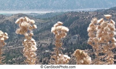 Highland panorama in Turkey - Dry plant and a rock against...
