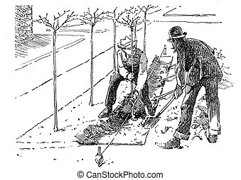 Agriculture engraving - planting trees in soil tracks -...