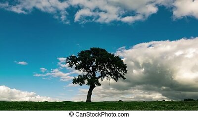 Fluffy Clouds over the Lonely Tree on Green Field