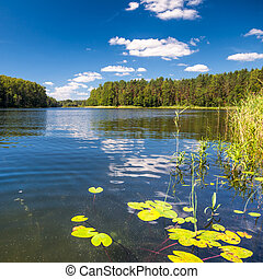 Summer day at remote forest lake