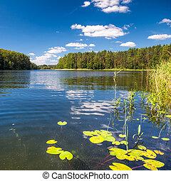 estate, remoto, lago, giorno, foresta