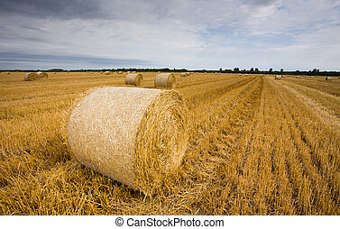 Straw bales at filed - Rural landscape of meadow with many...
