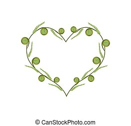Fresh Green Fiddleheads in A Beautiful Heart - Love Concept,...