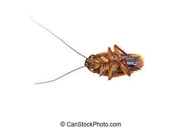 cockroach dead
