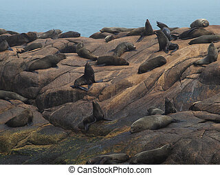 seal colony on the rocks beside of the ocean