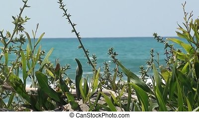 Natural vegetation on the beach close up, wavy sea in the...