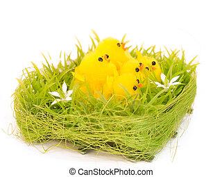 小雞, 設計, 被隔离, 復活節