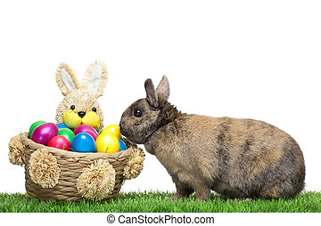 Easter bunny sitting in flower meadow with  colorful Easter egg