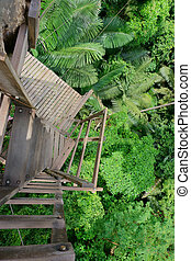 staircase in the jungle