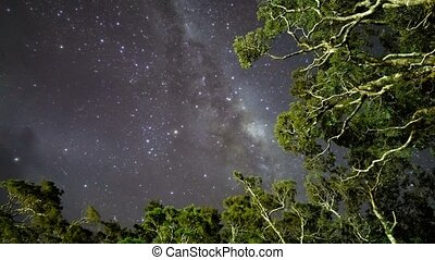 Milky Way Above Tree Tops, PD - Milky Way Above Tree Tops,...