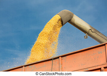 Pouring soy bean into tractor trailer. Grain being loaded...