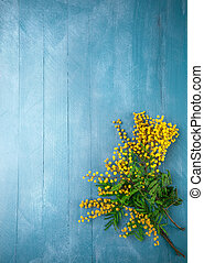 Branch blooming mimosa on blue wooden board - Branch...