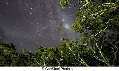 Milky Way Above Tree Tops, PLU - Milky Way Above Tree Tops,...