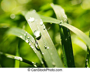 raindrop - Green grass with raindrops background