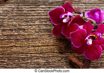 Bunch of violet orchids - Mauve orchid flowers close up on...