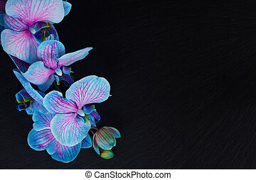 Bunch of violet orchids - Stem of fresh blue orchids on...