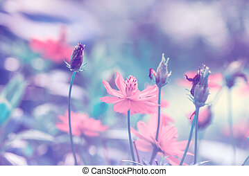 cosmos flowers - Retro flowers background.Beautiful flowers...