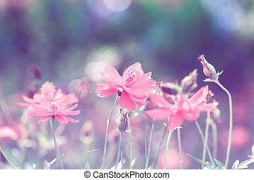 cosmos flowers - Retro flowers backgroundBeautiful flowers...