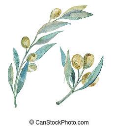 aquarela, verde, olives., azeitona, branches.,