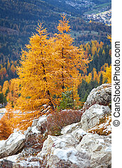 One colour tree in Dolomites and in the background is the...