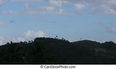 Landscape with coconut trees and mountains