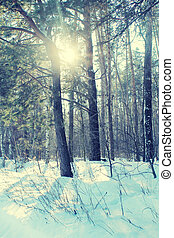 Winter forest Vintage toned image - Sunny day in a winter...