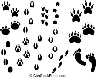 animal tracks - set of real animal tracks