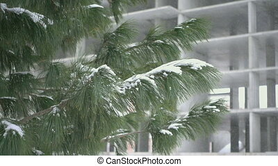 Falling snow, slow motion - Winter background with pine...