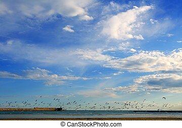 many seagull sea gulls flying Mediterranean