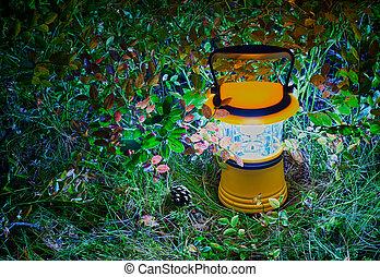 feuilles, main, Myrtille, lanterne