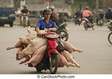 Transport of fresh pork - Everywhere and at all hours to...