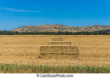 Agricultural landscape. Haystacks in a rural landscape