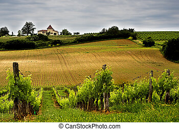 Winery - French winery in Aquitaine