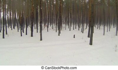 The camera flies through the forest - The camera flies...