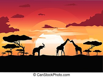 African sunset in the savannah with silhouette of animals -...