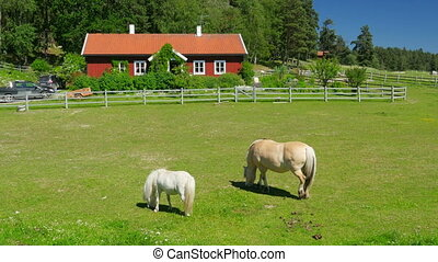 """horse grazing on grass, scandinavian countryside village near stockholm"""