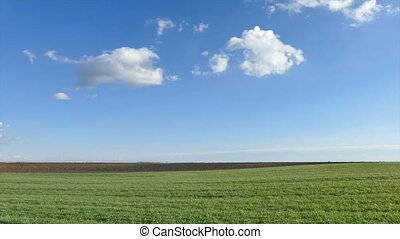Wheat field time lapse zoom in - Wheat field in early spring...