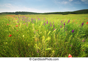Spring flower meadow Composition of nature