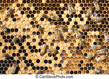 bees - A photography of beautiful little bees in early...