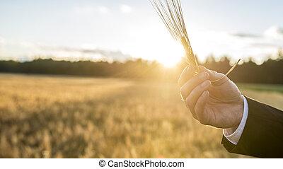 男性, 小麥, 藏品, 在上方, 被模糊不清, 手, 領域, 人物面部影像逼真, 背景, 耳朵