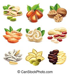 Nuts icons vector set - Nuts icons detailed photo realistic...