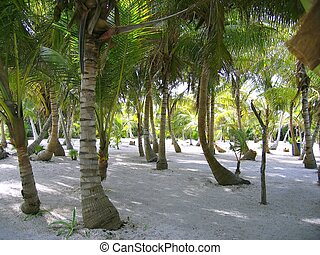 Caribbean beach with trees trunk painted white